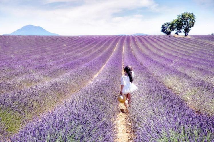 Lavender profile pic